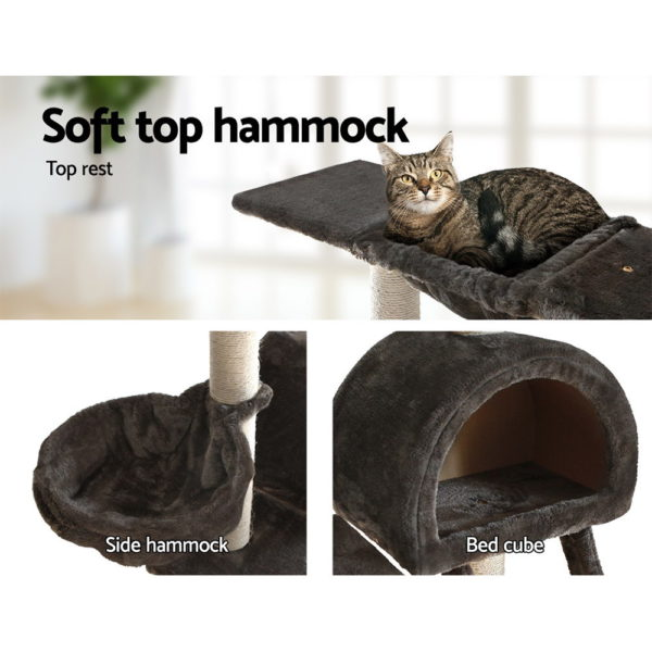 PET-CAT-HSCT003-GR-04