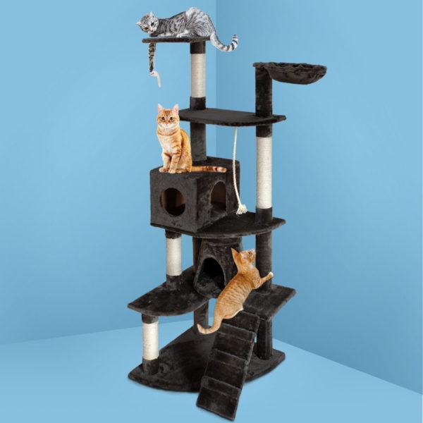 PET-CAT-HSCT018-GR-99
